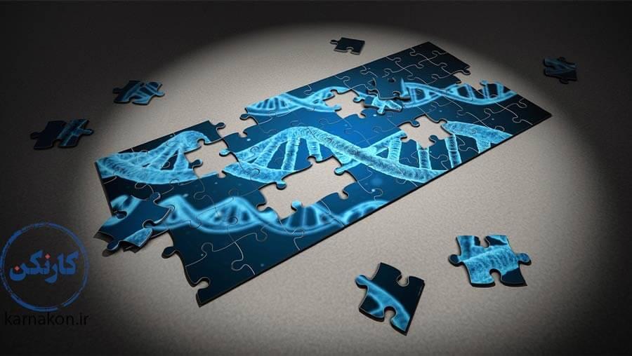 وراثت هوش حاصل تعامل چندین ژن گوناگون است.