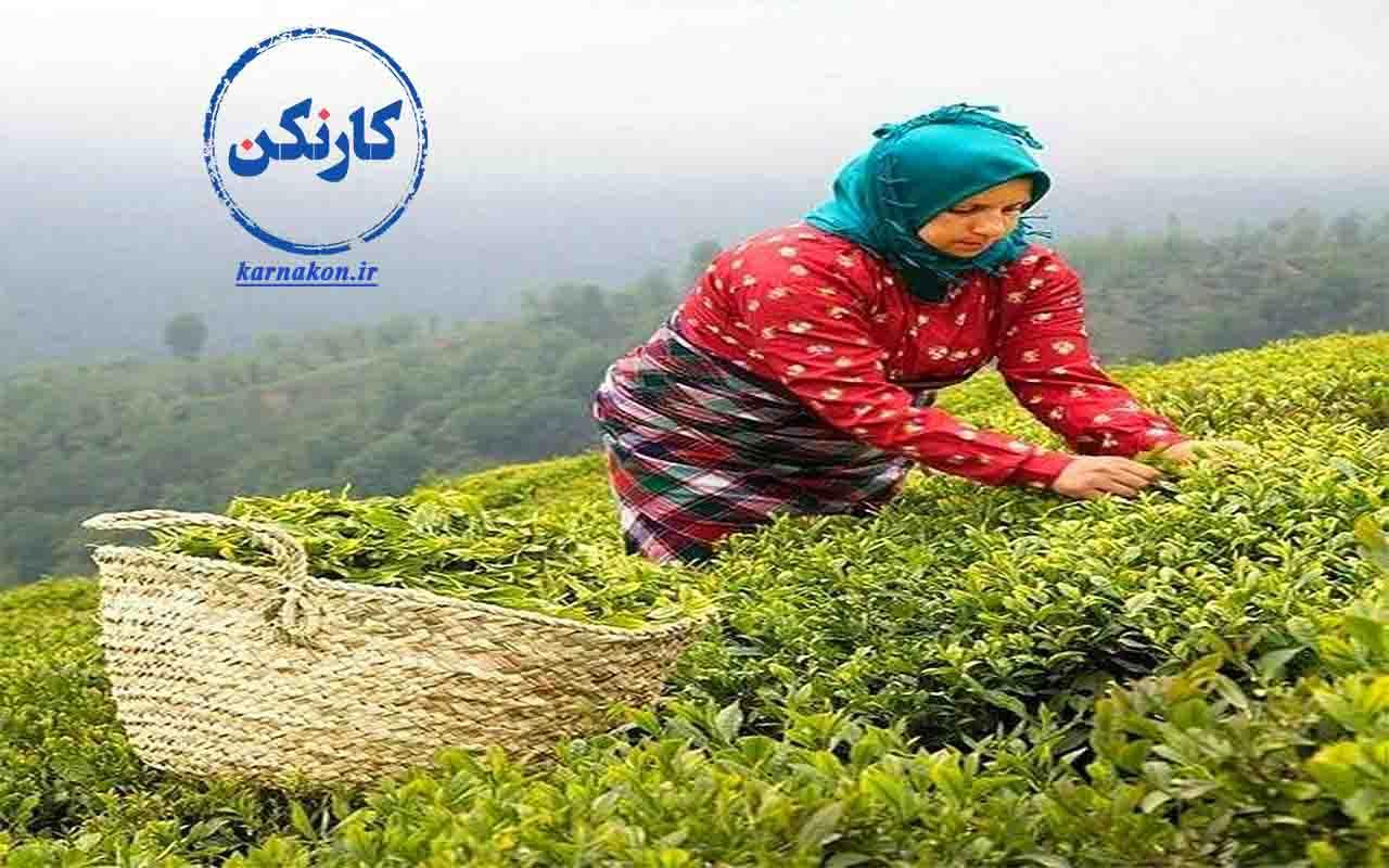 مشاغل زنان روستایی در شمال کشور و تنوع بسیار آن