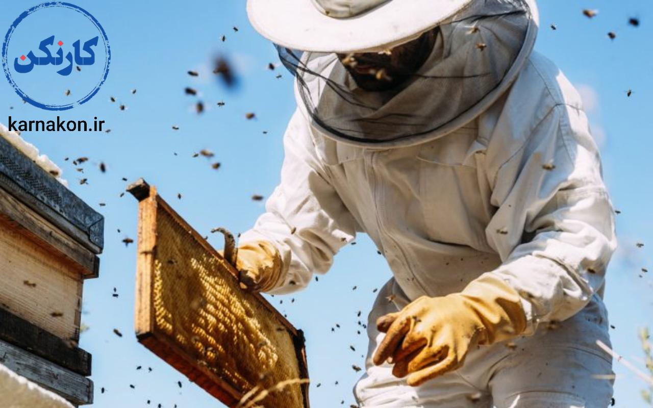 پرورش زنبور عسل یکی از مشاغل پردرآمد روستایی