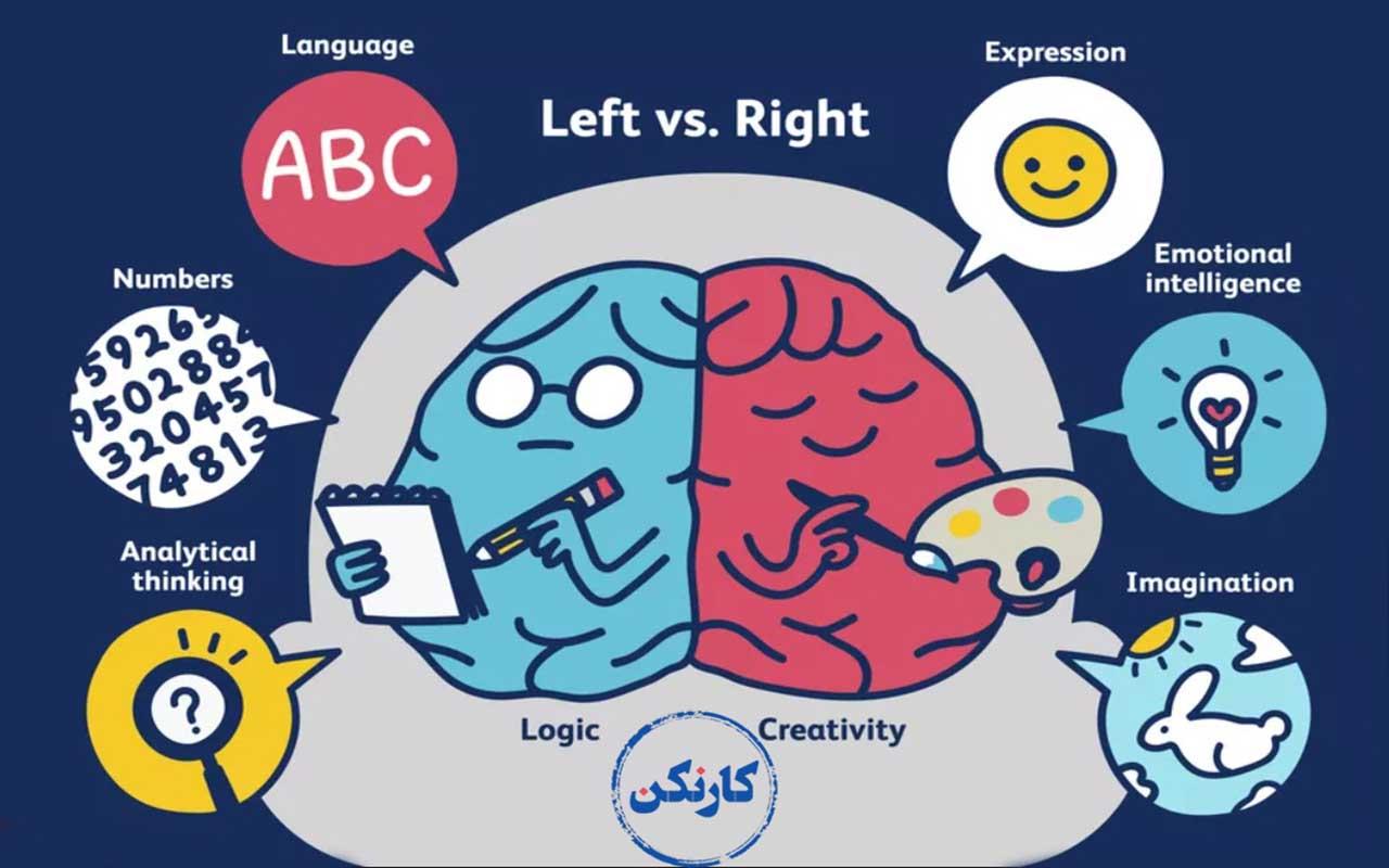 چرا تست هوش- چپمغزی و راستمغزی