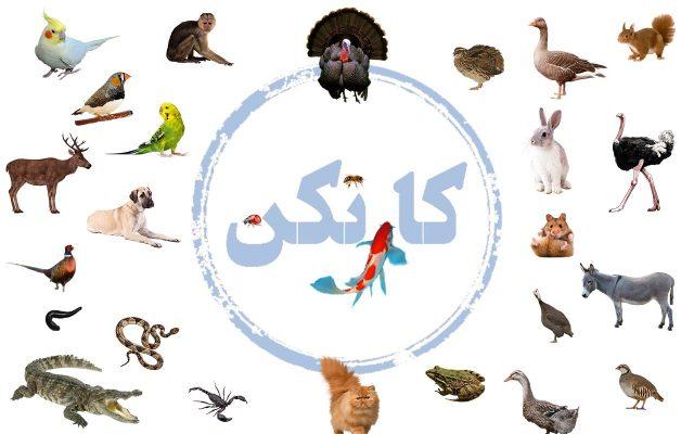تعدادی از حیوانات قابل پرورش