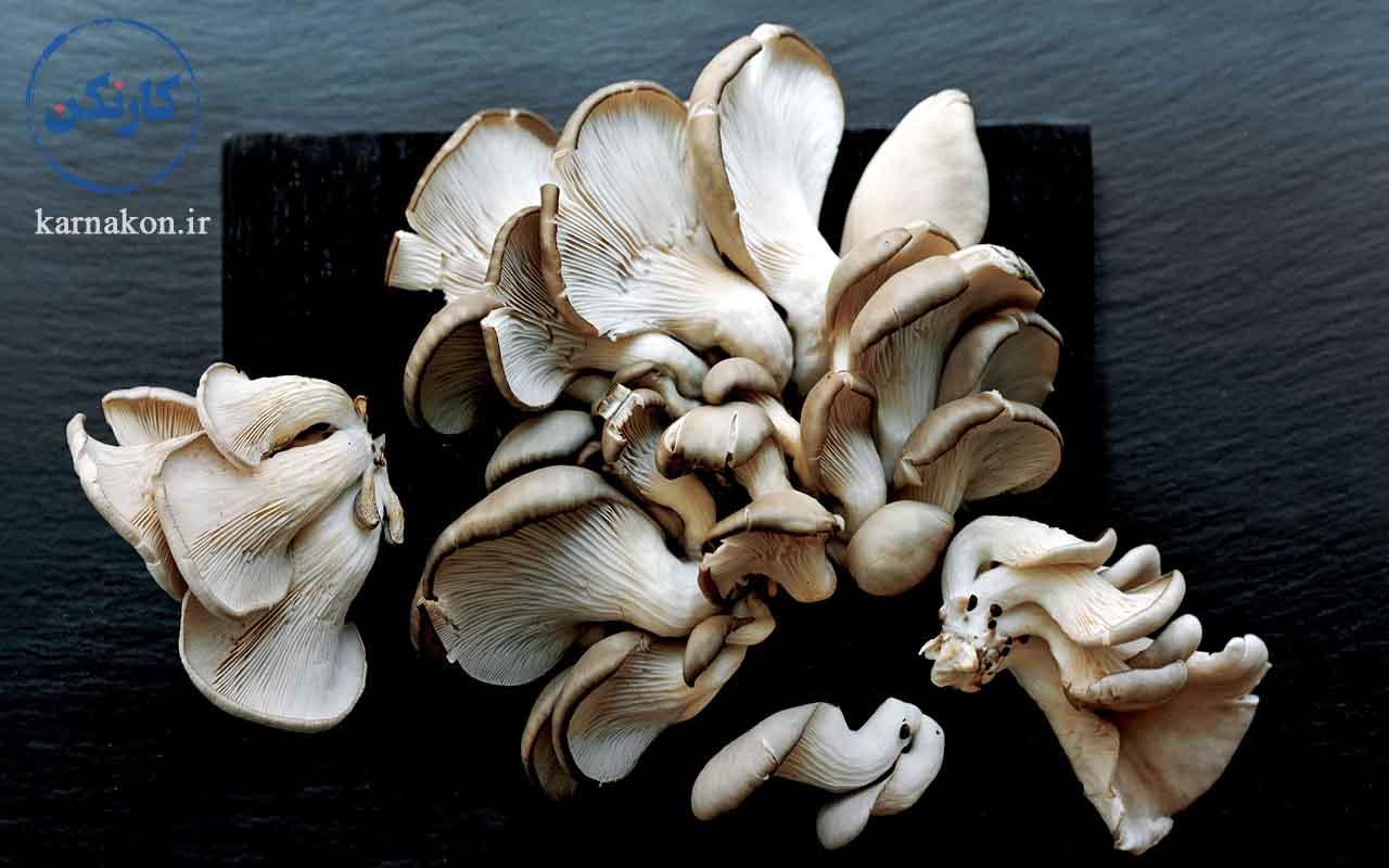 شروع کار با سرمایه کم در کشاورزی با کار کردن بر روی فروش قارچ صدفی