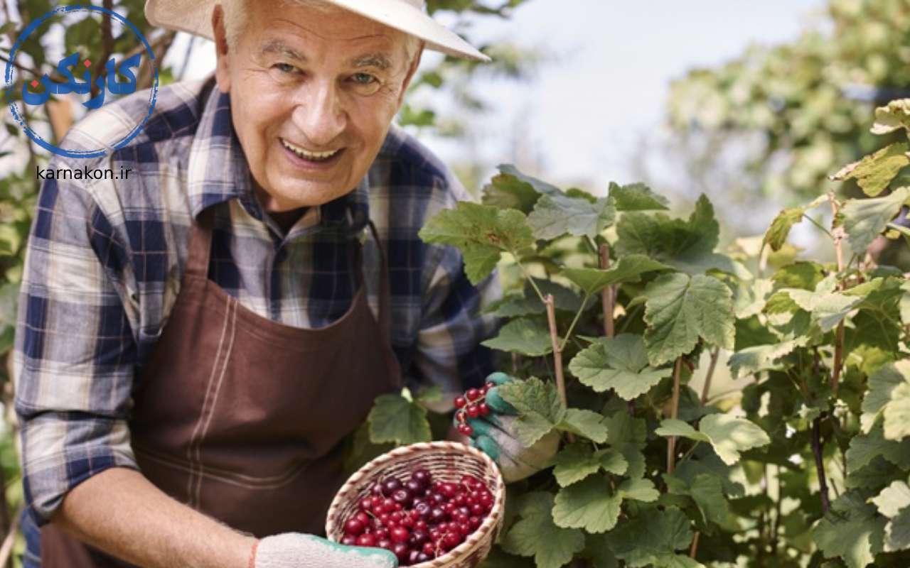 بهترین شغل برای دوران بازنشستگی